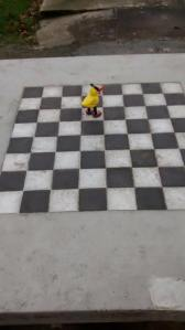 Angry Duck chess