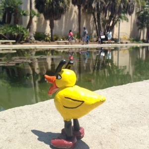 Angry Duck in San Diego