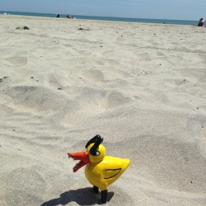 Angry Duck in San Diego beach