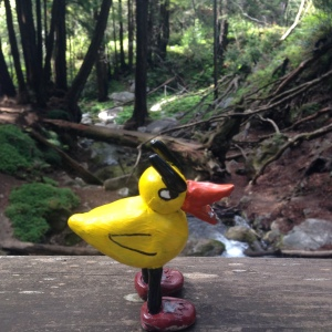 Angry Duck camping in Big Sur